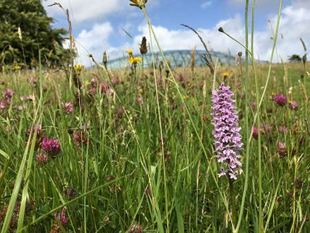 The National Botanic Garden of Wales is open
