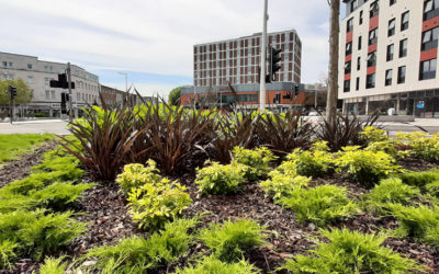 The Kingsway goes green as Swansea points to the future