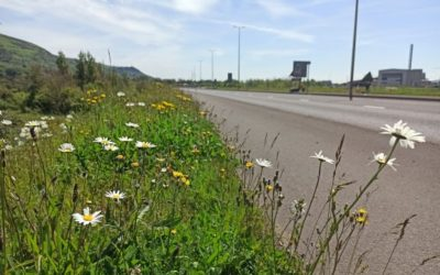 New scheme to ensure our grasslands are buzzing with life